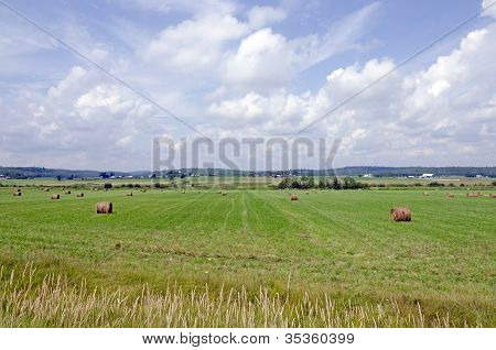 Hay Bails In A Field