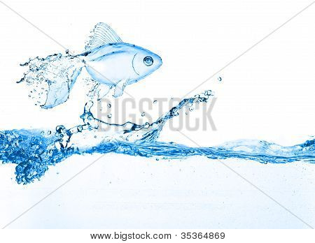 Wasser-Fisch