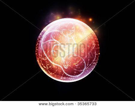 Spheres Of The Fetus