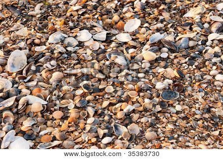 A Background Made Of Seashells.