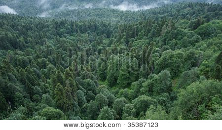 Wild mountain forests