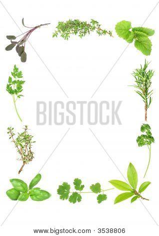 Ervas aromáticas frescas