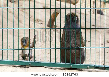 Sad baby monkey