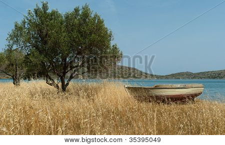 Fishing Boat On Mediterranean Shore Near Olive Tree