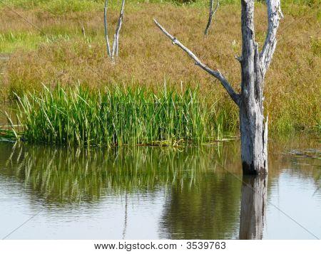 Tree Stump In A Marsh