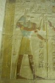 image of anubis  - Ancient Egyptian bas relief of the jackal headed god Anubis.  Abydos Temple near el Balyana, Egypt. 