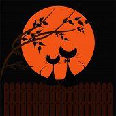 Постер, плакат: Влюблённые кошки в ночное время