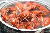 stock photo of crawdads  - some crawfish cooking in a large pot