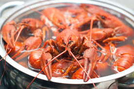 image of crawdads  - some crawfish cooking in a large pot  - JPG