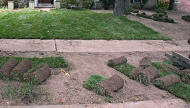 picture of fescue  - Sod being put over bare ground to quickly establish a new lawn - JPG