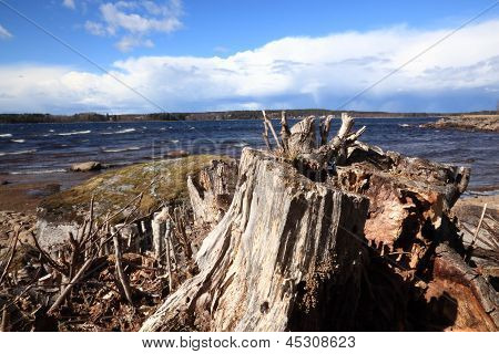 Stump near a lake