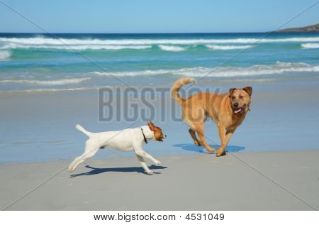 Dogs Running On A Beach