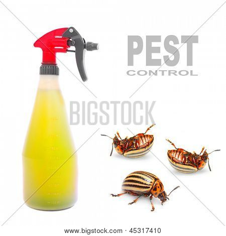 Plastic sprayer with insecticide and The Potato Beetle. Pest control concept.