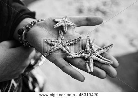 Three Dead Starfish Palm