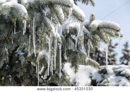 Icicles On The Tree