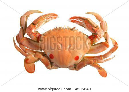 Cooked Swimmer Crab Isolated On A White Background