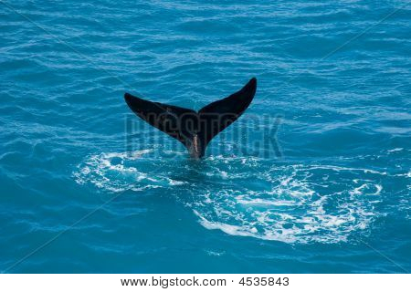 Whale Tail Sticking Out Of The Blue Ocean
