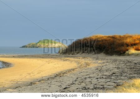 Sea buckthorn On The Dunes Of Yellowcraig Beach Firth Of Forth East Lothian Scotland Looking Tow
