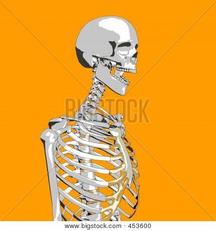 Bone 52
