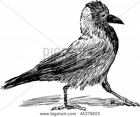 Walking Crow.eps