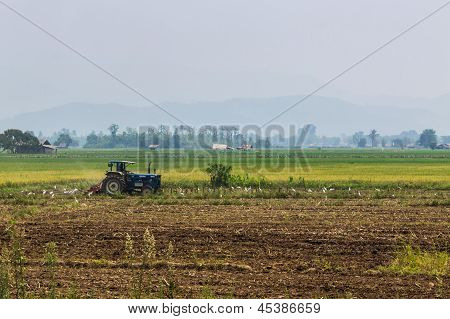Agriculture Plowing Tractor On Wheat Cereal Fields