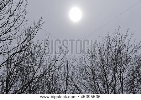 Gray Day With Sun And Trees