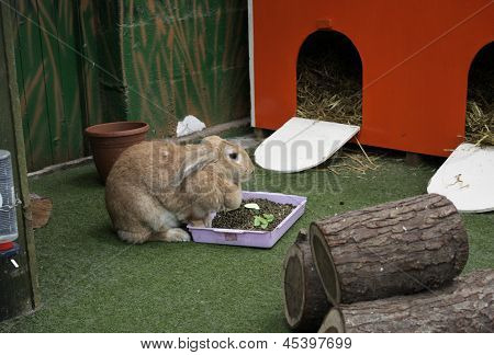 A Rabbit At Lunch