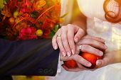 couple sunlight at wedding, bride and groom close-up hands with