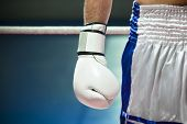 stock photo of boxing ring  - cropped view of man with boxing gloves. Copy space