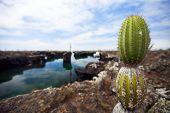 Постер, плакат: Вид области с кактусом опунция на Галапагосские острова Лос Tuneles
