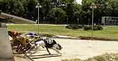 stock photo of greyhounds  - View of the start of a greyhound dog race - JPG