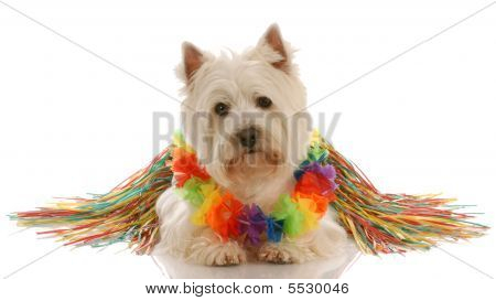 Westie Dressed As Hula Dancer
