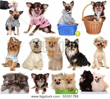 Set dogs isolated on a white background.