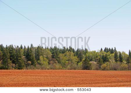 Country Treeline