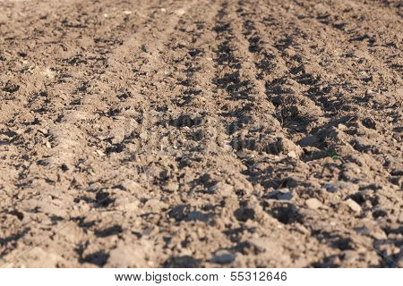 Field Arable
