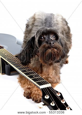 Decorative Shaggy Doggie And Black Guitar.
