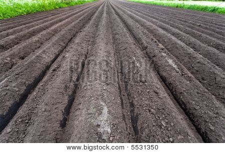 Freshly Cultivated Soil