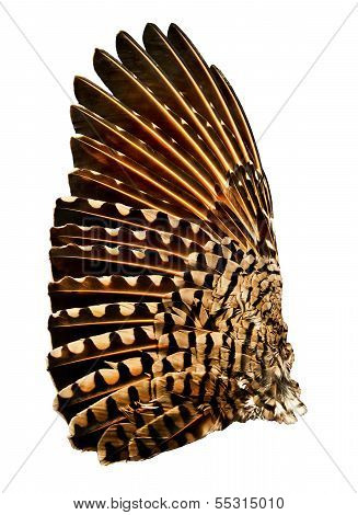 Flicker Bird Wing