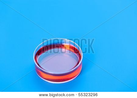 Petri dishes with samples for DNA sequencing