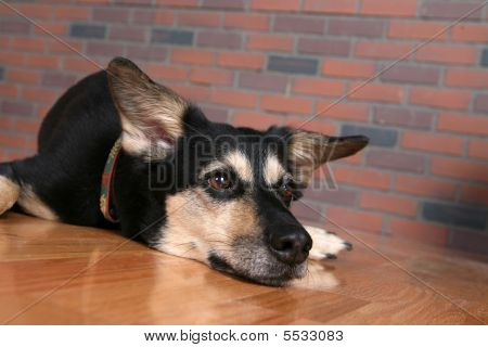 Dog With Chin Resting On Floor Looking Depressed