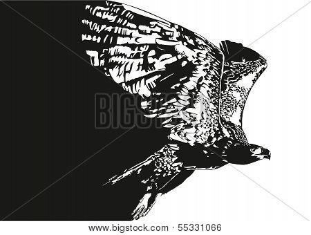 eagle flying 2
