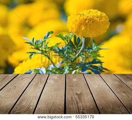 Asteraceae In A Botanical Garden And Empty Wooden Deck Table.