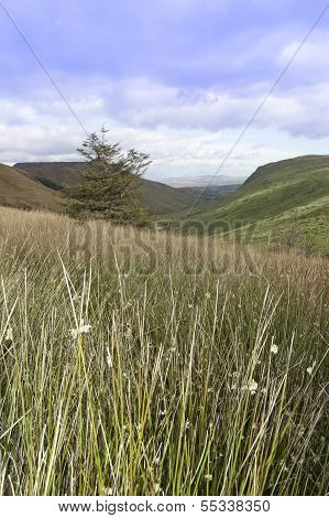 Long Tall Wild Grass And Bogland With Green Mountains