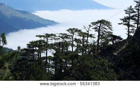 Clouds On The Hillside. Coniferous Forest. Tarahtash Path. Crimea, Ukraine