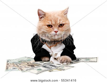 Cat Sitting On The Dollar