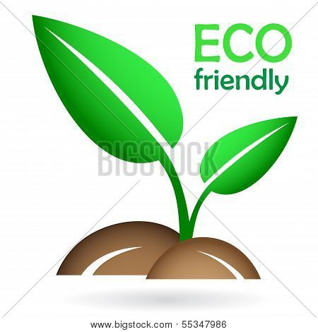 Eco concept - green young sprout
