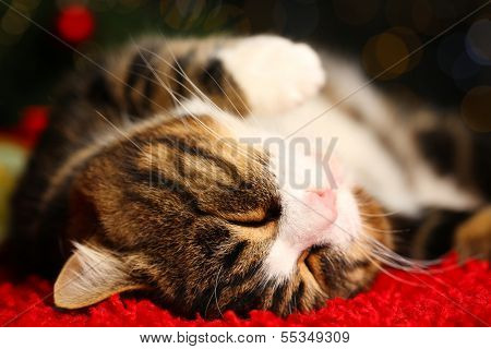 Cute cat lying on carpet with Christmas decor
