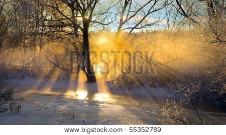 Sunbeams Filtered Through Bare Tree