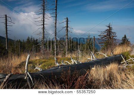 Aridity Trees