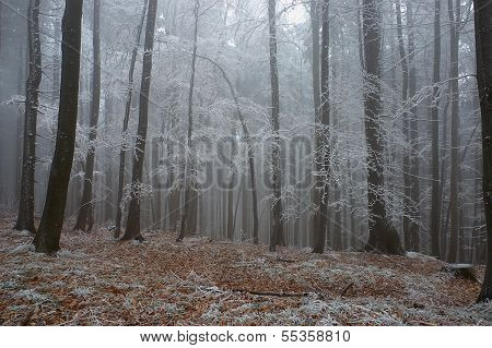 In Frosty Pine - Wood